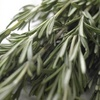 cooking with herbs - rosemary